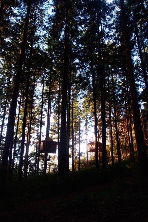 Merchanders Cabanes als arbres